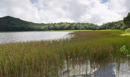 Grenada island - Grand Etang Lake. Grenada island - Grand Etang National Park - Grand Etang Lake royalty free stock image
