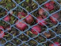 Grenades derrière la barrière Photos stock