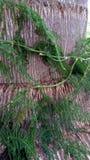 Grenn autour de tronc d'arbre Image libre de droits