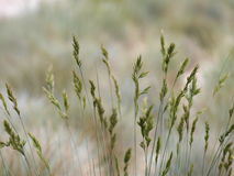 Grenn gras. Abstract natural background Royalty Free Stock Images