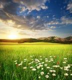 Grenn meadow in mountain Royalty Free Stock Image