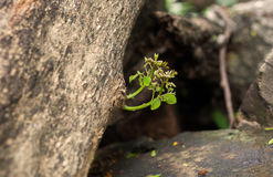 Grenn plant. Green plant growing on dead timber Royalty Free Stock Image