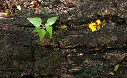 Grenn plant. Green plant growing on dead timber Stock Image