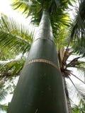 Grenn träd Royaltyfria Foton