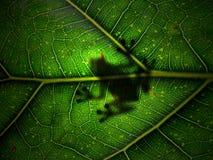 Grenouille Image libre de droits