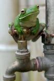 Grenouille d'arbre White-lipped sur le robinet Photos libres de droits
