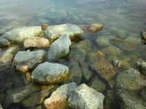 Grenouille dans l'eau Images libres de droits