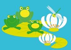 grenouille de concert Photo stock