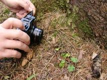 Grenouille de forêt de tir d'appareil-photo Photos stock
