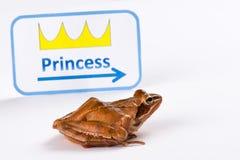 Grenouille de ressort (dalmatina de Rana) sur le chemin des itd'embrasser la princesse Photo stock