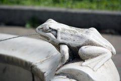 Grenouille en pierre Photos stock