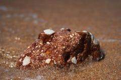 Grenouille en pierre méditerranéenne photo libre de droits