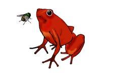 Grenouille et mouche rouges Image libre de droits