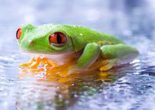 Grenouille froide Photographie stock