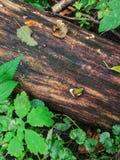 Grenouille mignonne sur un parc national de Poleski de forêt de poli d'identifiez-vous La Pologne 2018 photographie stock libre de droits