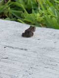 grenouille solitaire photo stock