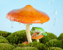 Grenouille sous la pluie Image stock