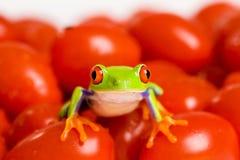 Grenouille sur des tomates Photo libre de droits