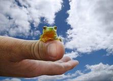 Grenouille sur le pouce - ciel nuageux Photos libres de droits