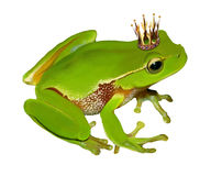 Grenouille verte dans la couronne Image libre de droits