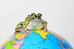 Grenouille verte et globe Photo libre de droits
