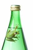 Grenouille verte sur la bouteille verte Photos stock