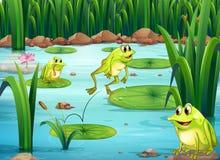 grenouilles Photos stock