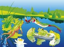 Grenouilles chassant sur leur étang avec le crapaud Photo stock