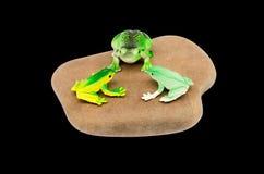 Grenouilles de jouet sur une pierre Photographie stock libre de droits