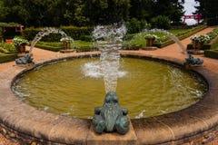 Grenouilles et eau Images libres de droits
