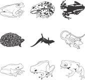 Grenouilles et lézards illustration libre de droits