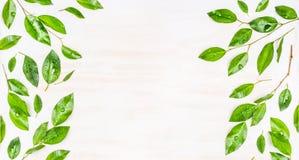 Grens of banner van Groene bladeren met dauwdalingen op witte houten achtergrond, hoogste mening Stock Foto's