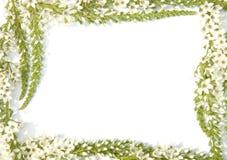 Grens met bloemen Stock Afbeeldingen