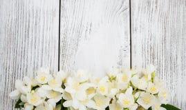 Grens met jasmijnbloemen Stock Fotografie
