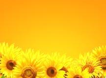 Grens met zonnebloemen Royalty-vrije Stock Foto