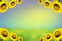 Grens met zonnebloemen op achtergrond Stock Afbeeldingen