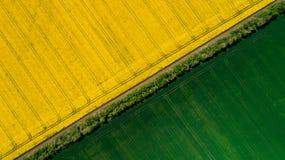 Grens tussen groene en een gele koolzaadgebieden stock afbeelding