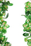 Grens van bladeren Stock Foto's
