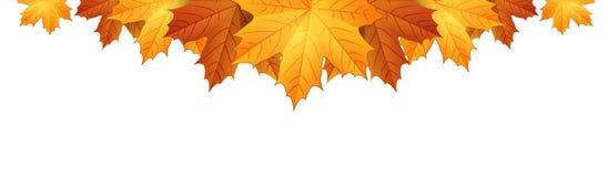 Grens van de bladeren van de herfstesdoorns Stock Foto