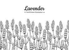 Grens van de lavendel de vectortekening Geïsoleerde wilde bloem en bladeren Kruiden gegraveerde stijlillustratie stock illustratie