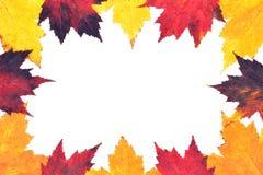 Grens van gekleurde de esdoornbladeren van de Herfst Royalty-vrije Stock Afbeelding