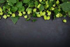Grens van groene hoptakken op donkere houten achtergrond brewing royalty-vrije stock afbeelding