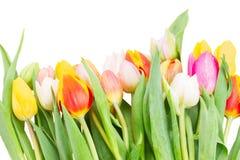 Grens van multicolored tulpenbloemen in witte pot Stock Foto