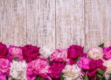 Grens van pioenen op een houten achtergrond met lege ruimte voor tekst Royalty-vrije Stock Afbeeldingen