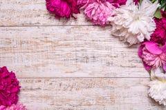 Grens van pioenen op een houten achtergrond met lege ruimte voor tekst Stock Afbeeldingen