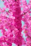 Grens van tot bloei komende roze de boomtakken van de sacurakers in tuin Royalty-vrije Stock Fotografie