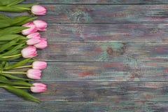 Grens van verse roze de lentetulpen Stock Foto's