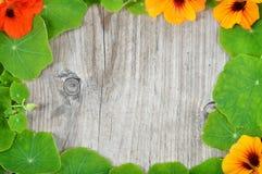 Grenzdekoration von Kapuzinerkäseblättern und -blumen Lizenzfreies Stockfoto