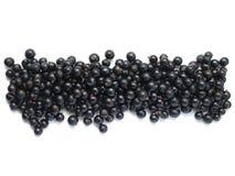 Grenze der schwarzen Johannisbeere Stockfoto
