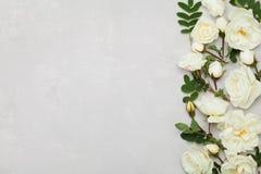 Grenze der Weißrose blüht und Grün verlässt auf hellgrauem Hintergrund von oben, schönes Blumenmuster, flache Lage Stockfotografie